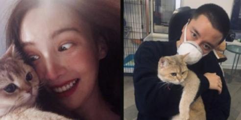贾乃亮否认与金晨恋情:公司的猫,手机壳一次买了俩